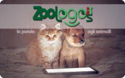 Card Zoologos