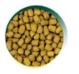 Mangus del Sole - Cat Hypo Pesce. 2kg