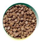 Mangus del Sole - Cat Superpremium Senior. 2kg