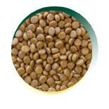 Mangus del Sole - Cat Grain Free Tacchino. 7,5kg
