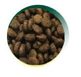 Mangus del Sole - Dog Grain Free Small B. Pollo Patata Dolce. 2kg